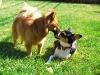 Luna and Beanie